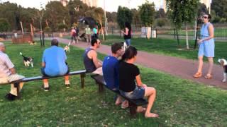 מפגש הביגלים הגדול הראשון - בפארק השלולית בנתניה 23.8.2014
