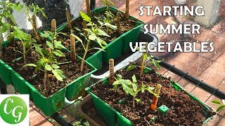 Starting Summer Vegetables - A Complete Guide To Starting Vegetable Seeds - Tomatoes, Peppers etc.