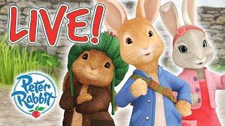 Peter Rabbit | Rabbit Loves Radishes   Livestream