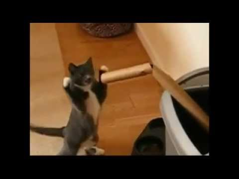 Let's Go Kitty Boxing - Adorable.