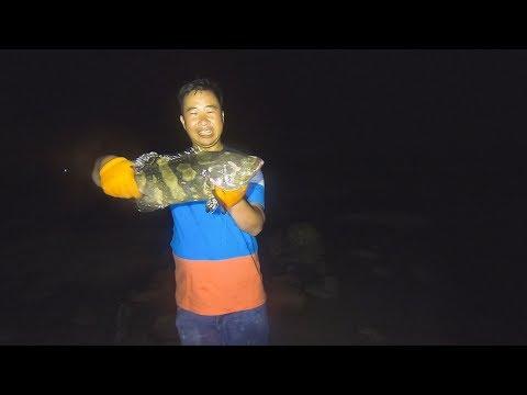 半夜赶海靓货好多,玉平在齐膝的水里连抓鲨鱼、大石斑鱼,太威猛