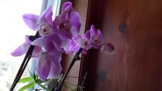 ORCHIDS, AMARYLLIS, MOCK ORANGE AND HOSTAS
