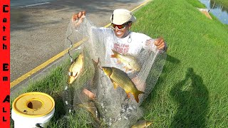 NETTING 100s of FISH in CAST NET! **Cooking SWAMP CARP**