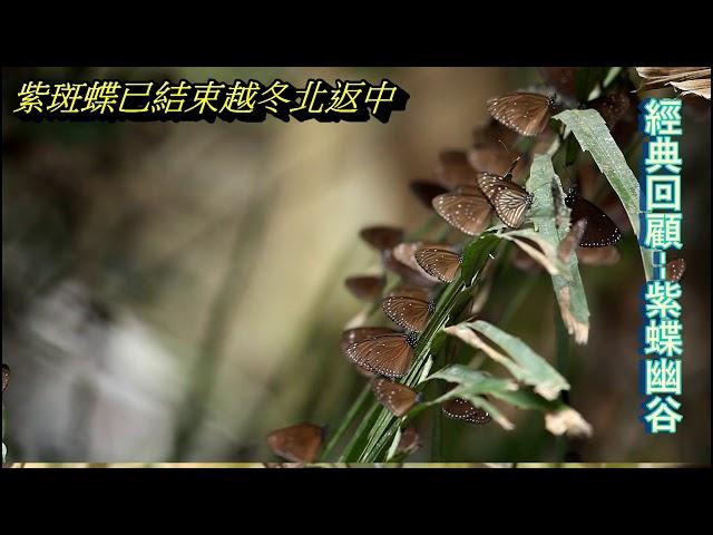 <html> <body> Film for Purple Butterfly2020-3-18 </body> </html>