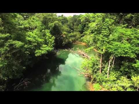 סרטון של יער הלקנדונה