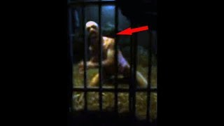 Top 10 Mysterious Creatures Caught On Camera   Unbelievable Creatures Sightings On Videos | Kholo.pk
