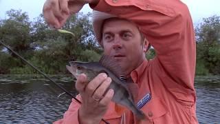 Рыбалка братья щербаковы отводной поводок