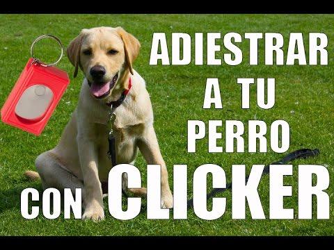 Adiestrar a tu Perro con CLICKER en 5 Min
