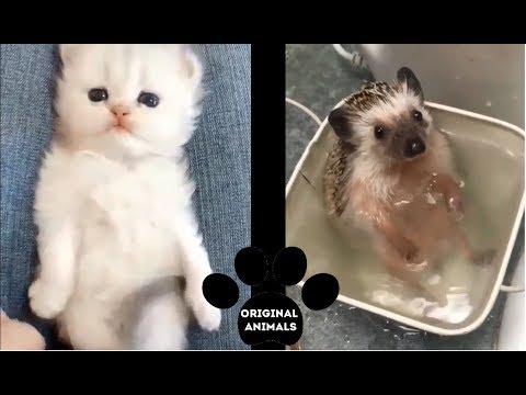 Original Animals #10. CUTE AND FUNNY ANIMALS VIDEO/ МИЛЫЕ И СМЕШНЫЕ ЖИВОТНЫЕ.