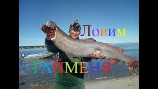 Ловим тайменя, осетра и налима! Рыбалка в Якутии! Yakutia