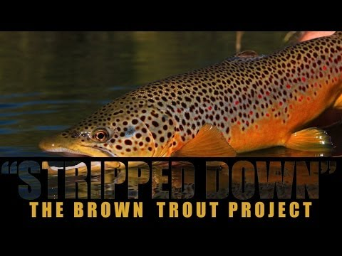 Brown Trout Project