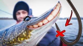Рыбалка 3 не ест что делать