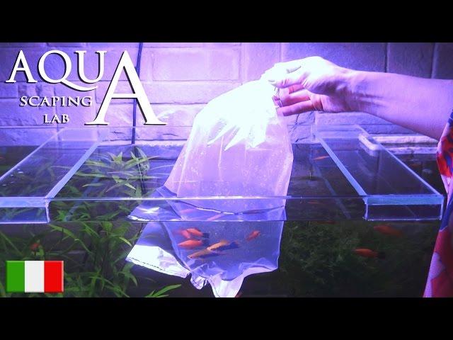 Aquascaping Lab - Inserimento nuovi pesci in acquario o cambio vasca, acclimatazione e ambientamento