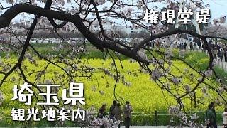 埼玉県観光地案内権現堂堤編