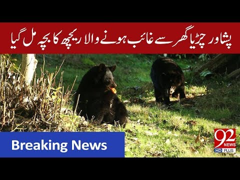 Black bear cub missing from Peshawar Zoo recovered | 21 September 2019 | 92NewsHD