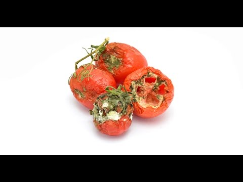 , title : 'Generating electricity with tomato waste