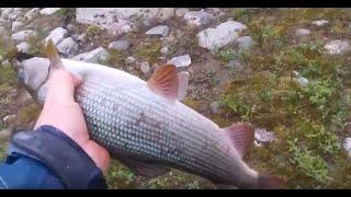 Рыбалка на усы