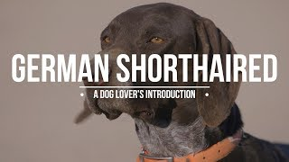 GERMAN SHORTHAIRED POINTER: A DOG LOVERS INTRODUCTION