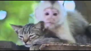 Кошка сосется с обезьяной Приколы 2017. #приколы Сообщество #ONUTUBE