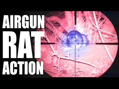 Airgun Rat Action