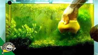 Do we really need Carbon in a fish tank?