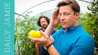 Let's talk about tomatoes: Jamie Oliver