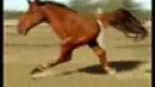 Youtube frau mit pferd