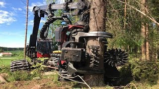 Worlds Modern Long Reach Excavator Machine Working - Heavy Equipment Cutting Big Tree Machine