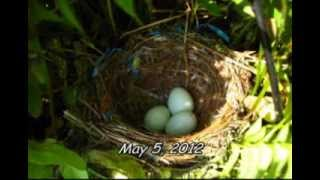 Life Cycles: A Bird Story