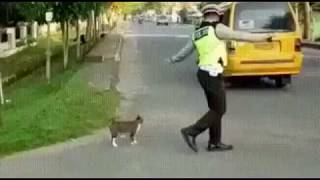 Кошка переходит дорогу