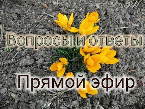 👋Вопросы и ответы про переезд в Краснодарский край