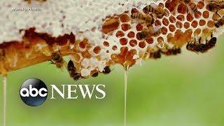 The buzz about super-food Manuka honey