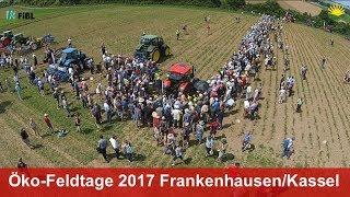 Öko-Feldtage auf der Hessischen Staatsdomäne Frankenhausen (Juni 2017)