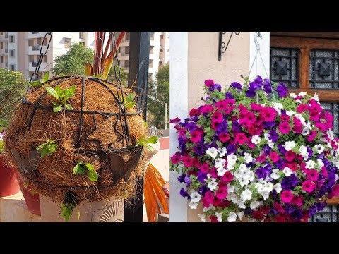 Petunia Ball - Beautiful Garden DIY || Fun Gardening