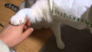 袋猫と遊ぶ