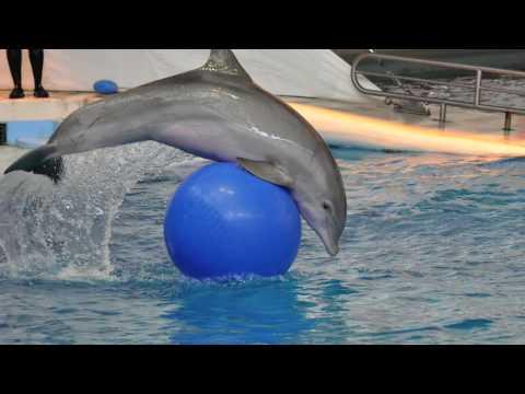 Kaarten met dolfijnen, Dolphin Show