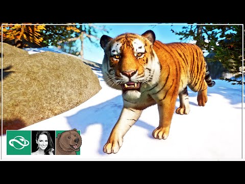 🐻 Siberian Tiger Habitat | Let's play Planet Zoo Franchise Mode | Ep. 6 |
