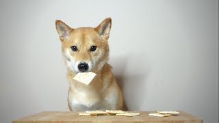 How Many Saltine Crackers Can Dog Eat? [ASMR]