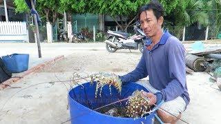 Tin Tức 24h: Thủy sản chết bất thường ở vịnh Xuân Đài, Phú Yên