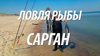 Сарган рыболовные товары