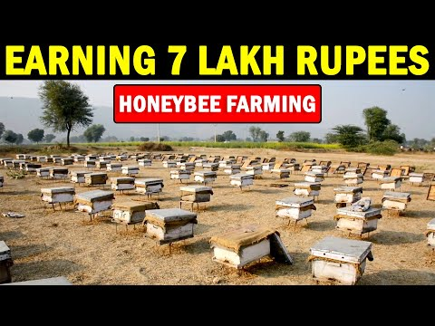 , title : 'Honey Bee Farming | Beekeeping Farming (Apiculture)