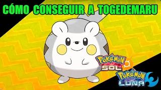 Togedemaru  - (Pokémon) - Tutorial cómo conseguir a TOGEDEMARU - Guía pokémon Sol y Luna
