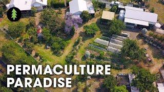 Incredibly Abundant 1-Acre Permaculture Homestead Tour – Limestone Permaculture Farm Revisit