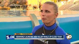 Seaworld launches Killer Whale Up-Close Tour