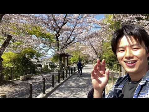 Japan Kyoto Cherry blossom 8APR 2020 / Local guide report / Philosopher's path / Japan Sakura