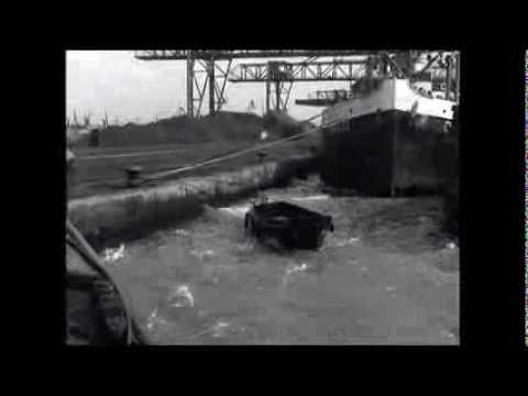 Meeuwen sterven in de haven