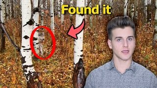Can You Find These Hidden Animals?