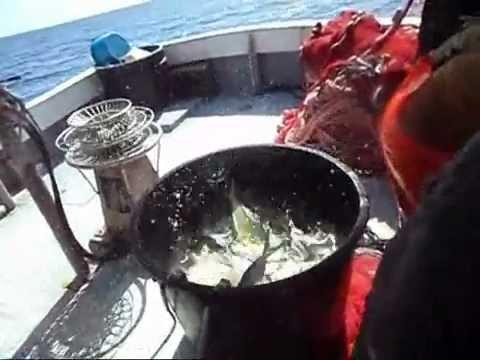 La guida il russo che pesca 2.5 su