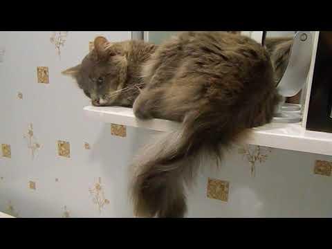 Невоспитанный кот перечит хозяйке.Коты и дача.