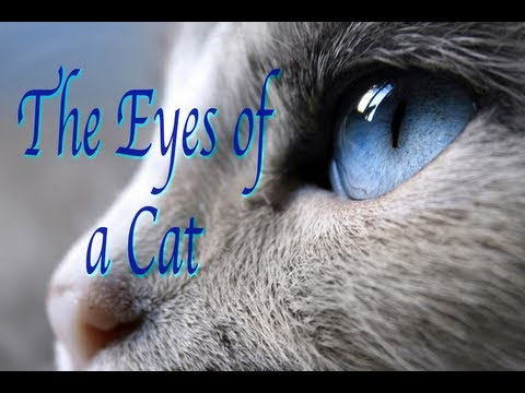 """The Eyes Of A Cat"""